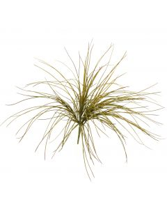 Onion Grass Bush in Olive Green