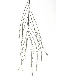 "55"" Salix Branch with Leaves (Curly Willow) Natural"