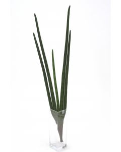 Sanseveria Plant Stem in Dark Green