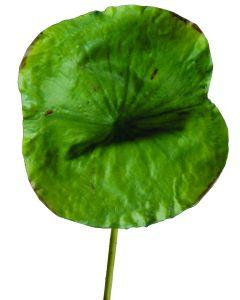 """27.5"""" Plastic Lotus Leaf in Green"""