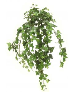 Medium Green Ivy Bush Vine (Sold in Multiples of 6)