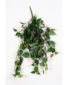 Philodendron Bush in Green (Sold in Multiples of 6)
