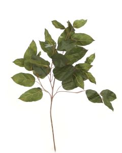 Salal Branch Olive Green (Sold in Multiples of 24)