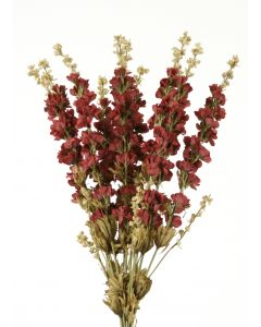 "26"" Delphinium Cluster Stem in Wine"