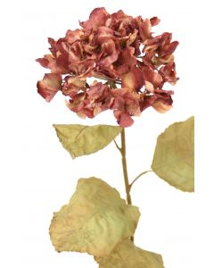 Everlasting Hydrangeared/Gold (Sold in Multiples of 12)