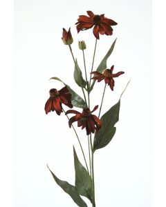 "29"" Black Eyed Susan in Dark Rust"