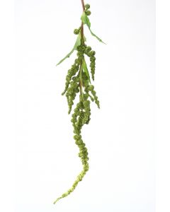 Hanging Amaranthus Spray in Sage Green
