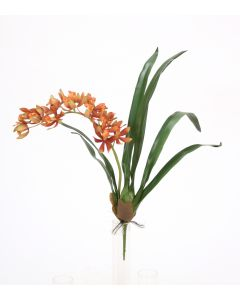 "20.5"" Mini Cymbidium Plantred Gold"