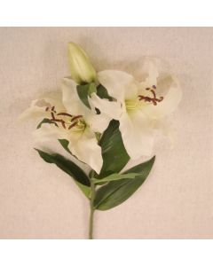 "35.5"" Casablanca Lily X 2 with 1 Bud-Coated Cream"