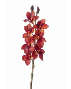 "36"" Cymbidium Orchid in Rust (Sold in Multiples of 12)"