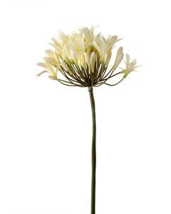 """33"""" Agapanthus Stem in Cream White"""