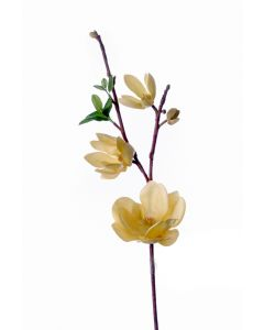 "21"" Saucer Magnolia in Cream Gold (Sold in Multiples of 6)"