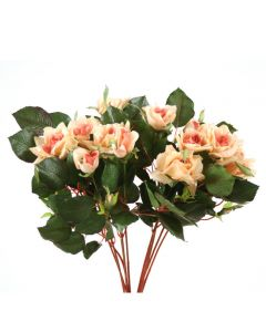 Pointed Rose Bush in Peach