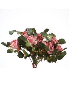 Large Rose Bush in Mauve