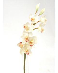 "Cymbidium Orchid Stem X 1 31""White"