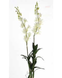Dendrobium Orchid Plant in White (Sold in Multiples of 4)