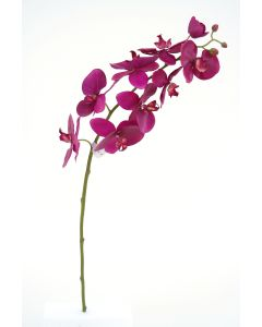 "31"" Phalaenopsis Stem in Violet"