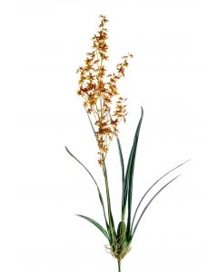 Large Oncidium Stem with Plant in Gold Brown (Sold in Multiples of 4)