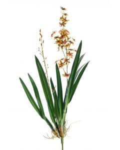 Large Oncidium Stem with Plant in Gold Green (Sold in Multiples of 4)