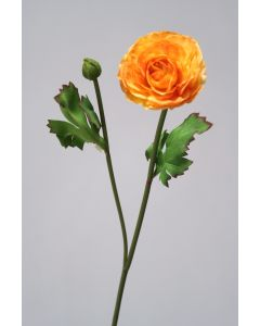 Gold Orange Ranunculus