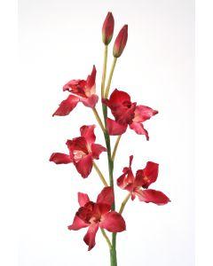 Cymbidium Orchid in Fuchsia Pink