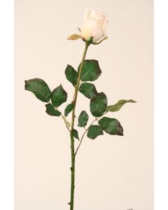 Large Dutchess Rose Bud in Champagne