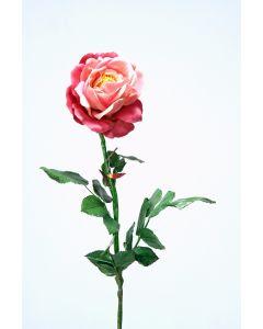 Red Mauve Rose