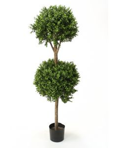 4.5' -5.5' Boxwood Double Ball Topiary in Black Plastic Nursery Liner
