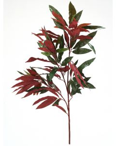 "29"" Capensia Tree (Sold in Multiples of 12)"