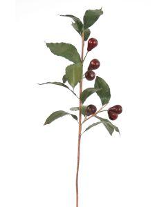 Olive Branch in Burgundy Red