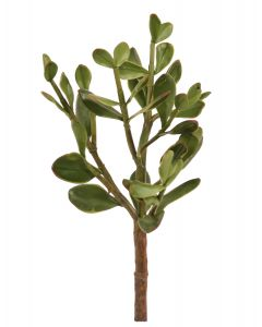 """13"""" Jade Plant Green (Sold in Multiples of 6)"""