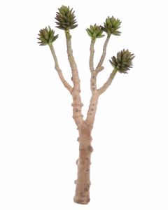 Large Succulent Tree in Light Green