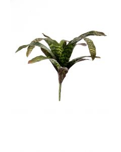 "22.5"" Bromeliad in Variegated Green (Sold in Multiples of 6)"