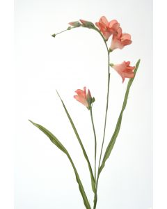 Freesia in Soft Pink (Sold in Multiples of 12)