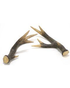 White Deer Horn