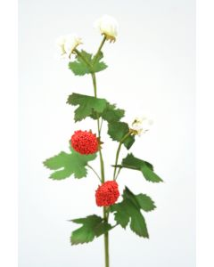 Strawberry Natural Red (Sold in Multiples of 12)