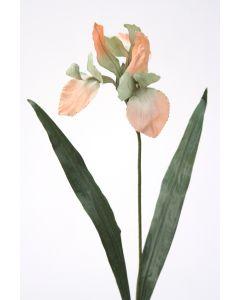 Large Iris Sonia/Celedo