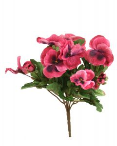 Pansy Bush in Deep Mauve Pink (Sold in Multiples of 12)