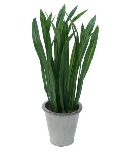 Carex Leaves in Victoria Oyster Planter