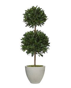 5' Sweet Bay Tree in Vertically Ridge Grey Planter