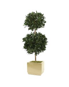 5' Sweet Bay Tree in Large Square Glazed Ivory Stoneware Planter