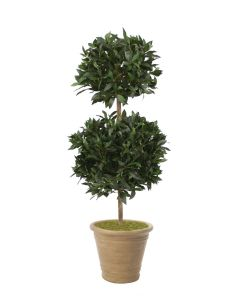 5' Sweet Bay Double Topiary in Light Marble Clay Terra Cotta Pot