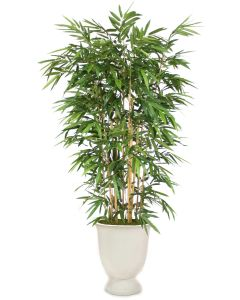 8' Bamboo Tree in in White Concrete Container