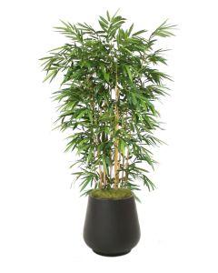 Bamboo Tree