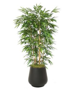 8' Bamboo Tree in Black Fiberstone Planter