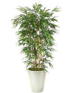 8' Bamboo Tree in Glazed White Stoneware Planter