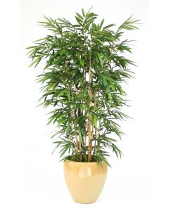 8' Bamboo Tree in Dark Sand Glazed Earthenware Planter