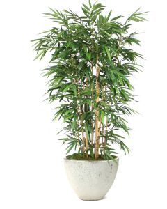 8' Bamboo Tree in X-Large White-Gray Washed Ovaltapered Concrete Planter