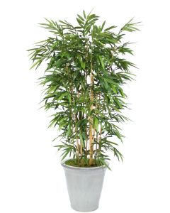 8' Bamboo Tree in Stoneware White Container