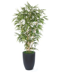 9' Bamboo Tree in Black Planter